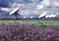 Very Large Array & Flowers
