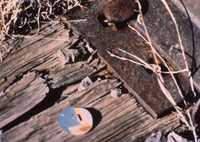 VLA Site Work, 1991